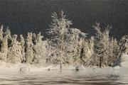 Snow On Trees Prints - Winter Begins Print by Lois Bryan