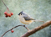 Tufted Titmouse Framed Prints - Winter Berries Framed Print by Betty LaRue