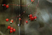 Photo Mixed Media - Winter Berries by Bonnie Bruno