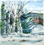 Jan Anderson Watercolors - Winter birches by Jan Anderson