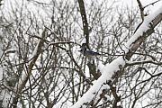 Paul SEQUENCE Ferguson             sequence dot net - WINTER BIRD