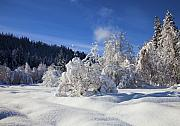 Winter Photo Originals - Winter Blanket by Mike  Dawson