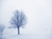 Winter Storm Art - Winter Blues by Randy Steele