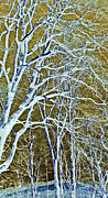 Susan Leggett Digital Art Metal Prints - Winter Blues Metal Print by Susan Leggett