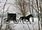 Amish Buggy Photos - Winter Buggy by David Arment