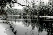 Winter Scenes Photos - Winter Calm by Emily Stauring