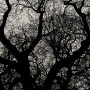 TONY GRIDER - Winter Canopy