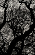 Dark Sepia Framed Prints - Winter Canopy Two Framed Print by Tony Grider