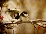 Parchment Framed Prints - Winter Chickadees. Framed Print by Kelly Nelson