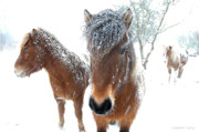 Robert Lacy - Winter Chills