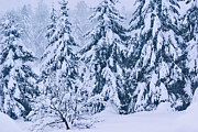 Snowed Trees Photo Metal Prints - Winter Coat Metal Print by Aimelle