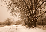 Snowy Road Posters - Winter Country Road Poster by Carol Groenen