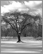 H Scott Cushing - Winter Day Arboretum...