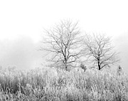 Bare Trees Metal Prints - Winter Day Metal Print by Julie Palencia