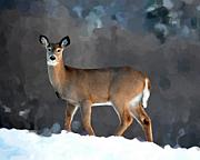 Whitetail Digital Art - Winter Doe by Diane E Berry
