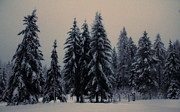 Winter Trees Art - Winter by Donna Duckworth