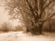 Old Country Roads Digital Art - Winter Dream by Carol Groenen