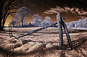 Infrared Photos - Winter Dream by Steve Zimic