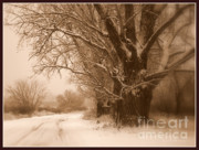 Snowy Road Photos - Winter Dream with Framing by Carol Groenen