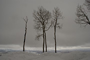 Winter Trees Metal Prints - Winter Elegance Metal Print by Ernie Echols