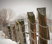 Field. Cloud Prints - Winter fence Print by Sandra Cunningham