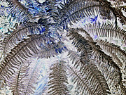 Digital Modified Prints - Winter Fern 2 Print by Heiko Koehrer-Wagner
