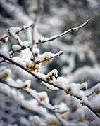Winter Photos - Winter Fleurs by Mike Reid