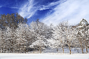 Park Scene Photo Prints - Winter forest covered with snow Print by Elena Elisseeva