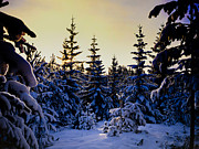 Medium Format Prints - Winter Forest Print by Hakon Soreide