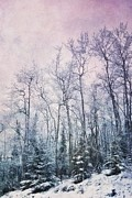 Pink Trees Posters - Winter Forest Poster by Priska Wettstein