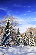 Park Scene Photos - Winter forest under snow by Elena Elisseeva