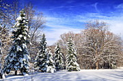 Winter Trees Photos - Winter forest with snow by Elena Elisseeva