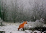 Winter-landscape Mixed Media - Winter Fox by Julie  Grace