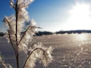 Scott Hovind - Winter Frost 5