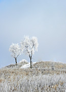 Snow Covered Trees Posters - Winter Frost Poster by Julie Palencia
