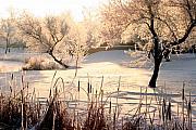 Steve Augustin - Winter Frost