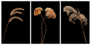 Prairie Grass Originals - Winter Garden Triptych by Steve Gadomski