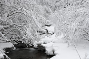 Pictures Photo Originals - Winter by George Cislariu