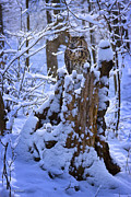 Stump Framed Prints - Winter Guest Framed Print by Ron Jones