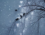 Blackbirds Prints - Winter Hearts Print by Gothicolors With Crows