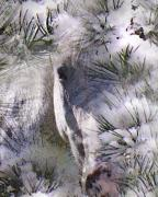 Pine Trees Digital Art - Winter Horse by Terril Heilman