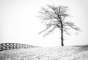 Storm Prints Framed Prints - Winter in Black and White Framed Print by David Waldrop