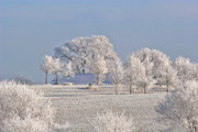 Frost Photo Originals - Winter in Canada by Christine Till