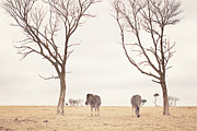 Johannesburg Photos - Winter In Safariland by photo by Anna Theodora