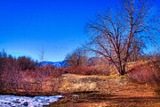 Denver Framed Prints - Winter in South Platte Park Framed Print by David Patterson