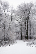 Wintry Photo Prints - Winter in the forest Print by Gabriela Insuratelu