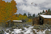 Eagles Mixed Media - Winter in the High Country by Julie  Grace