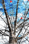 Tree Leaf Mixed Media Posters - Winter Is Near Poster by Andee Photography