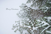 Christmas Card Digital Art Metal Prints - Winter Lace Metal Print by Joanne Smoley