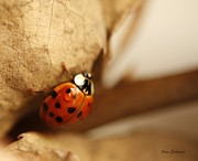 Flying Bugs Framed Prints - Winter Ladybug Framed Print by Yumi Johnson
